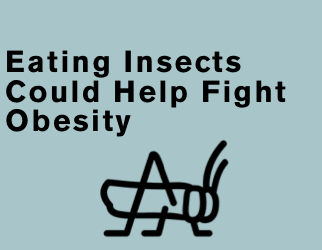 Eating Insects Could Help Fight Obesity – U.N.